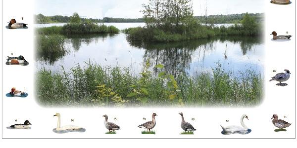 "Naturerlebnispfad Werbener See © Verein ""Freunde des Werbener Sees"" e.V."