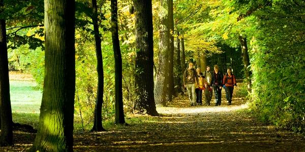 Herrliche Waldwege.
