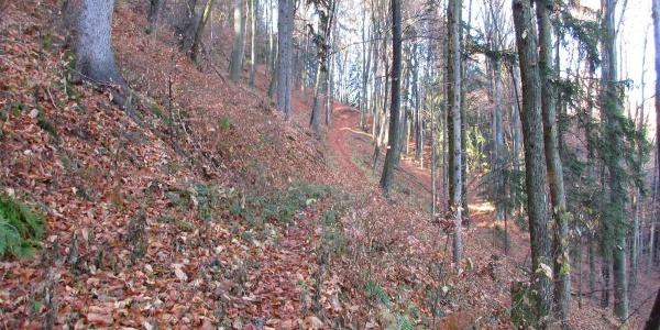 Anstieg Ruhri-Panorama-Weg