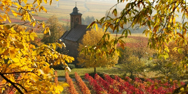 Nikolauskapelle in Klingenmünster im Herbst