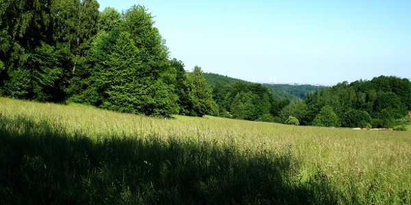 Sonniger pfälzer Waldpfad