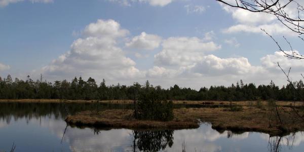 der Wildsee im Wildseemoor