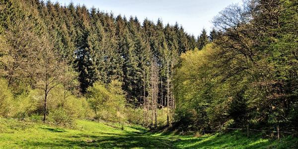 Maarbachtal Mühlenweg