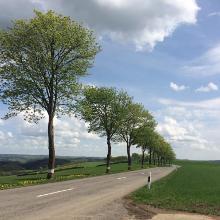 Allee zwischen Heinerscheid und Kalborn