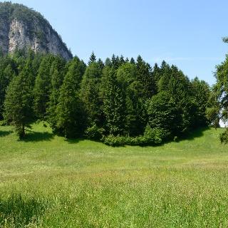 Wald- und Wiesenidylle im Naturpark Trudner Horn