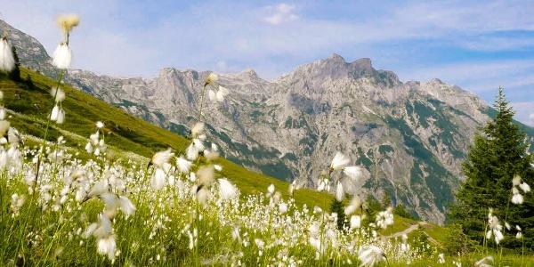 Die Natur genießen am Weg zur Werfenerhütte