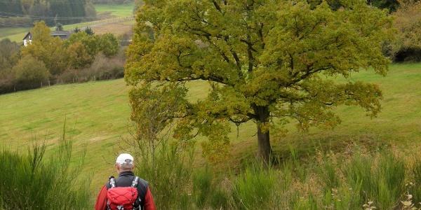 Partnerweg des Eifelsteiges: Burgen-Route