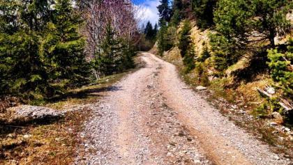 Auffahrt zur Radnig Alm