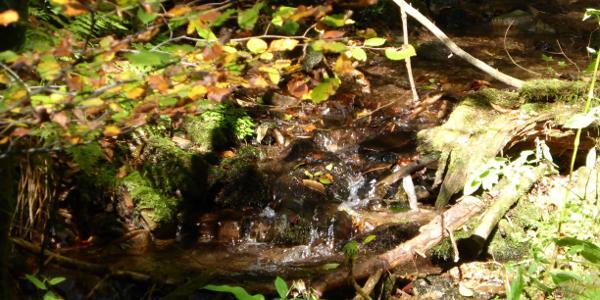 Kleine Wasserfälle unterwegs