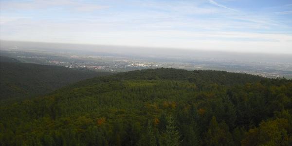 Von hier hat man eine tolle Aussicht über den Gipfeln des Naturparks Pfälzer Wald.