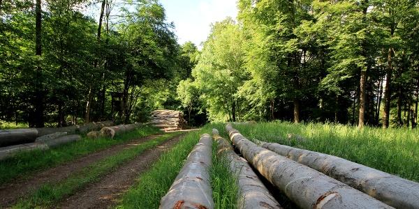 die Holzernte wartet auf die Abholung