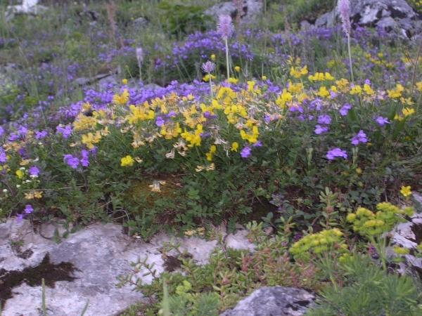 Blumenpracht vor dem Spitzsteinhaus