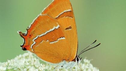Besuchen Sie den Schmetterlingspfad in Willebadessen!
