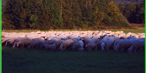 Rundwanderweg 11 - Viehwiesen Wolfshagen