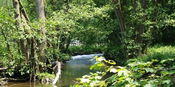 Die Amel - Flusslauf