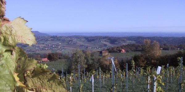 Blick auf Flamhof mit Weinblätter