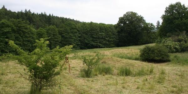 Ehemaliges Gelände KLoster Himmelpforte