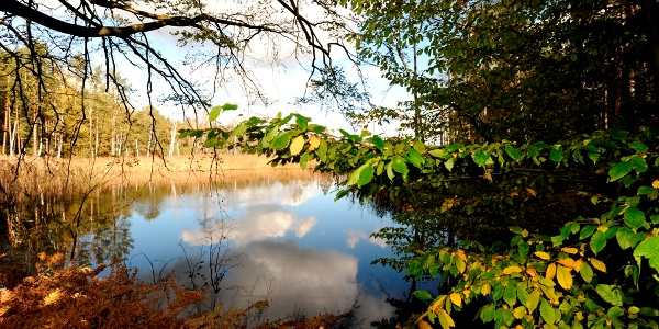 Presseler Heidewald und Moorgebiet © W.SIESING