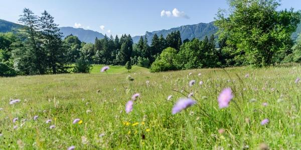 Mountainbiketour Drei Marken - Blick in die Ammergauer