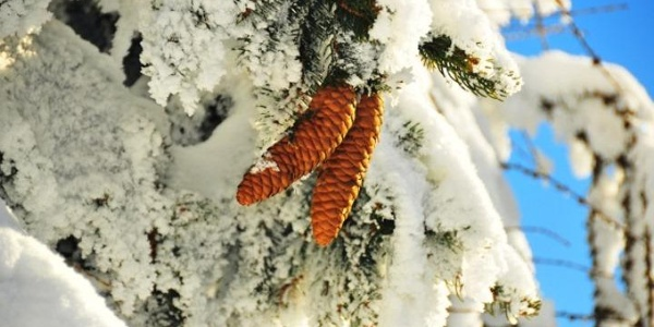 Verschneite Wälder im Joglland