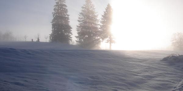 Winterlandschaft am Hanusel Winterwanderweg (4)