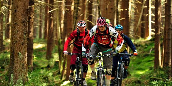 Trails in Holzhau