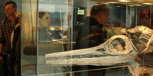 Fossilienmuseum im Werkforum