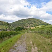 Blick auf den Ringelsberg