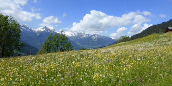 Blumenwiese im Gebiet Glän