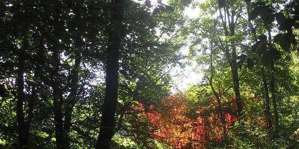 Unterwegs bieten sich immer wieder schöne Einblicke in den Naturpark Pfälzerwald.