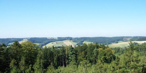 Ausblick auf dem Weg durch den Grafenwald