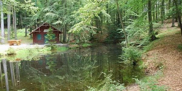 Waldhütte am Klingelfloss