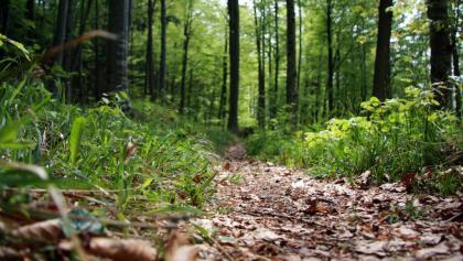 Laubwald an der Iller