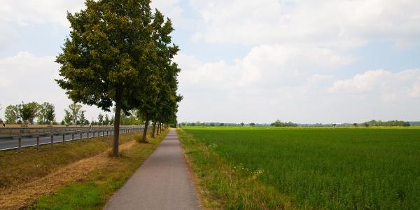 Radweg vor Eilenburg