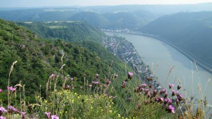 Auf den sonnigen, felsigen Hängen der Hindenburghöhe gedeiht eine artenreiche Flora.