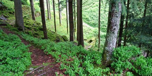 Weg zum Burgbachfelsen