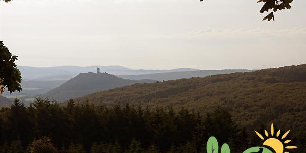 Blick vom Startpunkt auf die Burgruine Olbrück