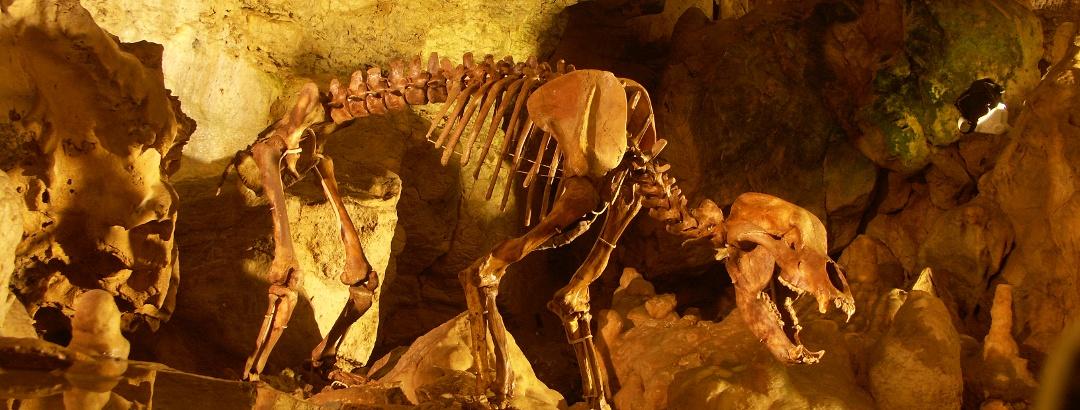Bärenskelett in der Bärenhöhle