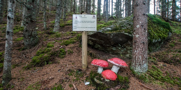 Replica of vomiting russula at Mushroom Nature Path