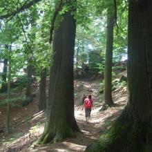 wenn die Bäume reden könnten