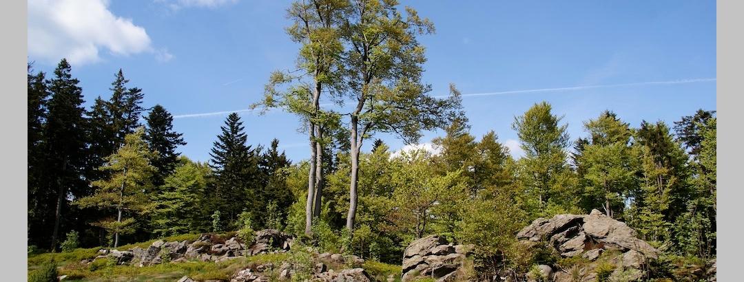 Hochberg (1025 m)