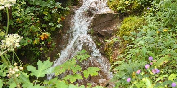 Kleiner Wasserfall am Weg zur Truckenthannalm