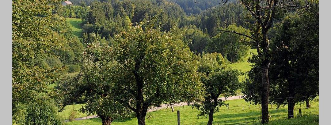 Streuobstwiese in Altensberg auf rund 700 Meter Höhe