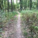 Durchs Unterholz bei Abtswind