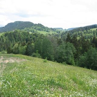 Die Rote Heide auf dem Weg nach Geratsried