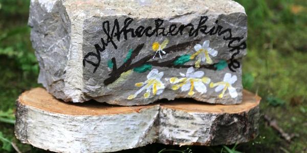Bienenpflanzen im historischen Park von St. Ruprecht an der Raab