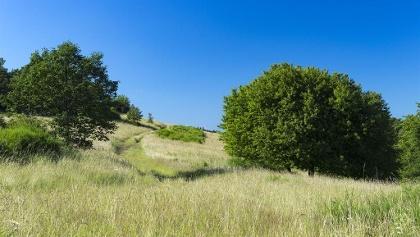 Weg durchs Naturschutzgebiet Wartekopf