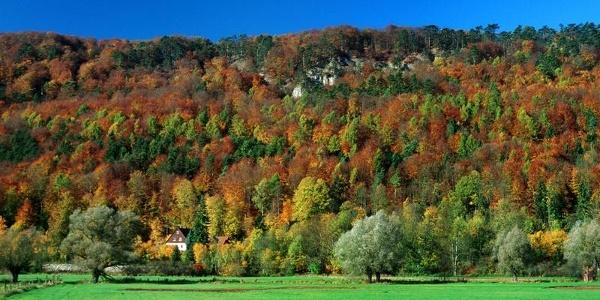Erlesene Natur: Die Buchenwälder der Weserhänge bei Höxter