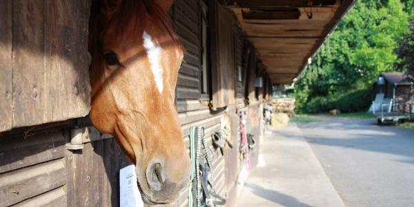 Pferd Gestüt Birkhausen