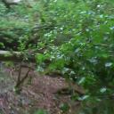 Unter die Stamm, verlor der Sattel sein halt...